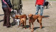 urban dog parks